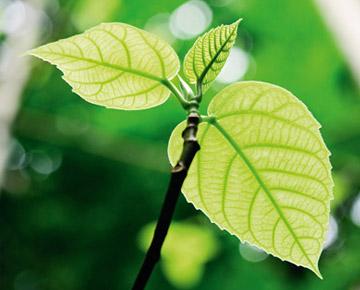 Soennecken eG ist ein nachhaltig wirtschaftendes Unternehmen